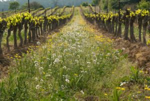 vignes en biodynamie