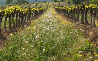Le vin au vert : la biodynamie