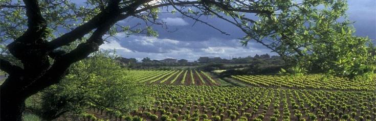 Languedoc : des domaines à découvrir